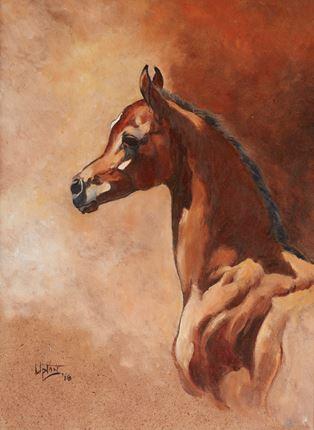 Colt Foal - head study