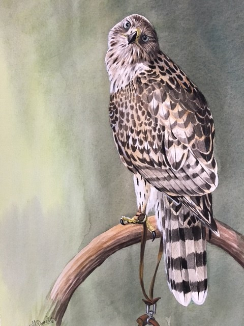 Goshawk on bow I