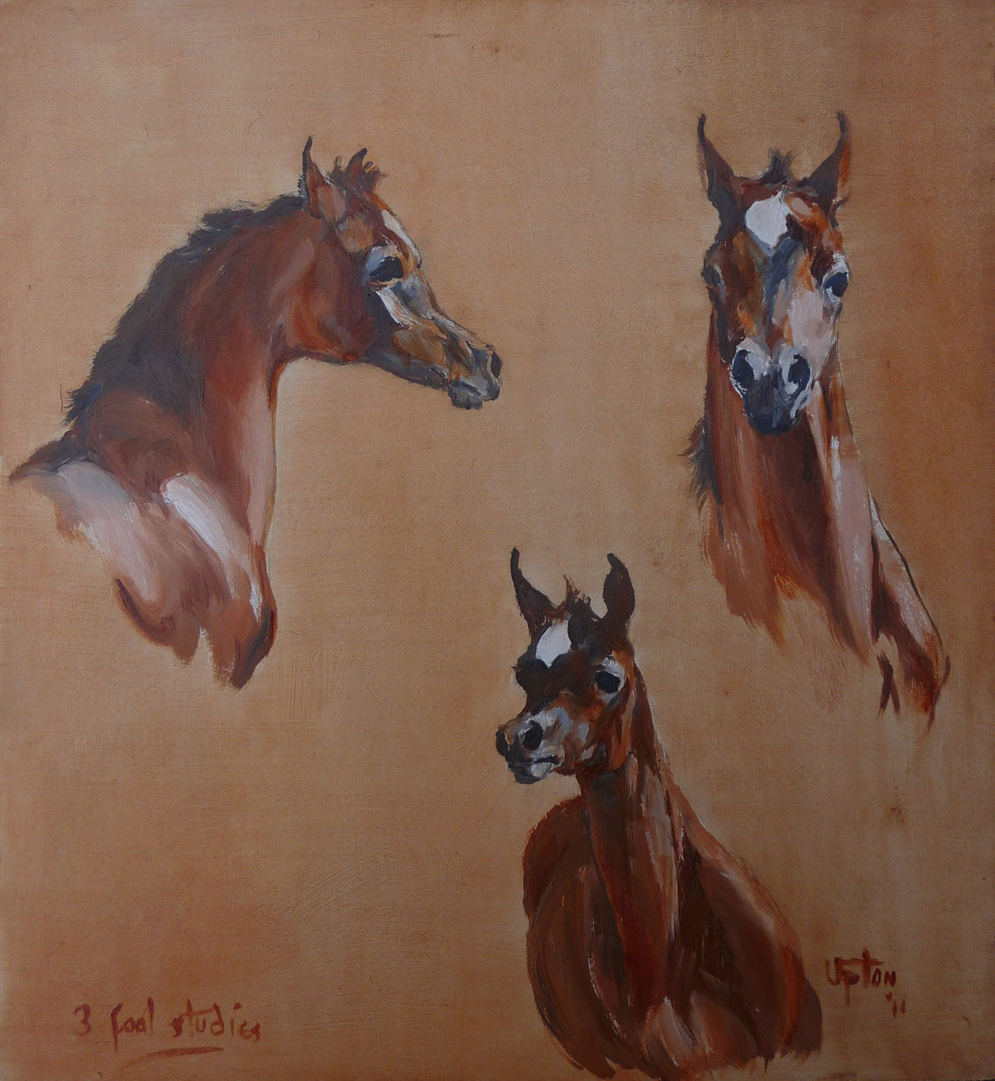 Three studies of the head of a foal