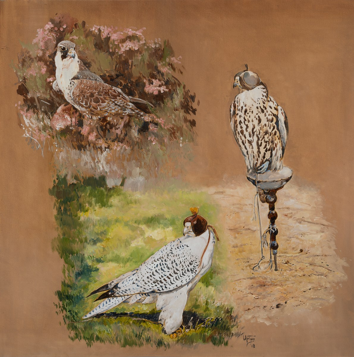 Peregrine, Saker and Gyr Falcon
