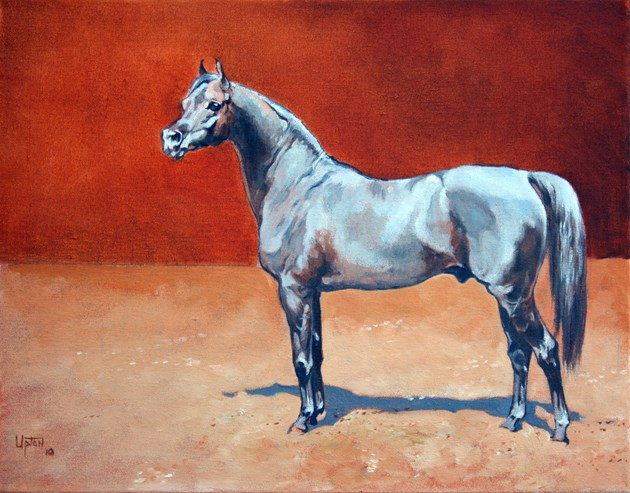 Dahman Stallion