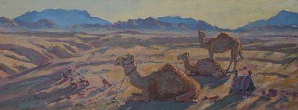 Camels near Wadi Rum