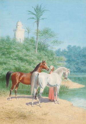 Groom with two Arab Stallions