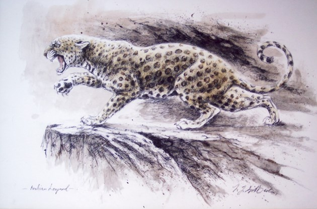 Study of Arabian Leopard